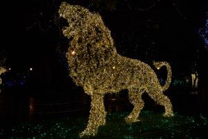 Salerno - Lo zoo che vorrei - il leone