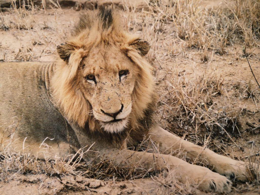 Sud Africa Leone